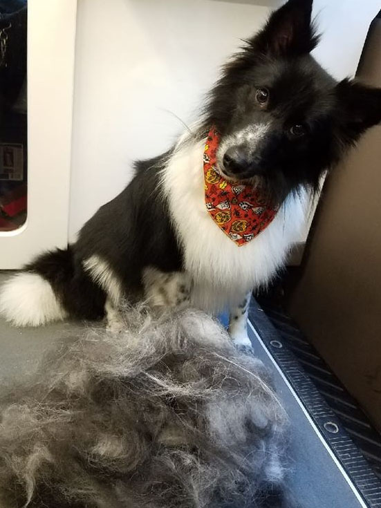 Freshly Groomed Dog at LaBest Pet Resort and Spa