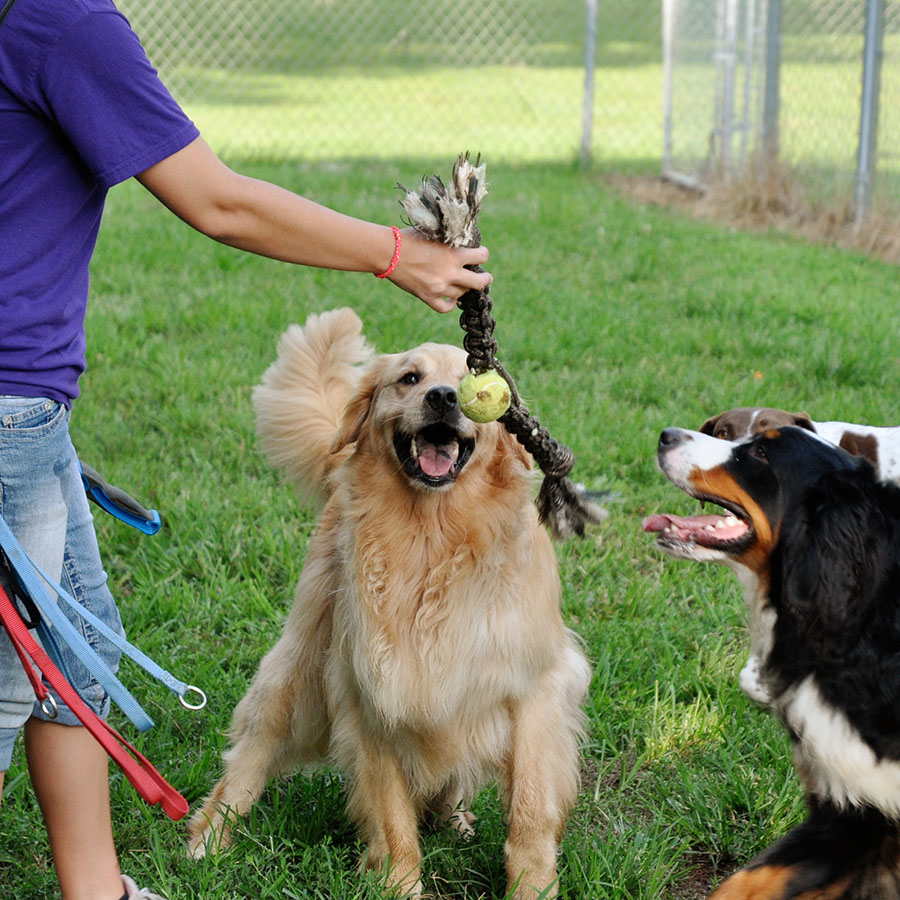 Dog Daycare at LaBest Pet Resort and Spa