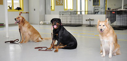 Dog Training at LaBest Pet Resort and Spa