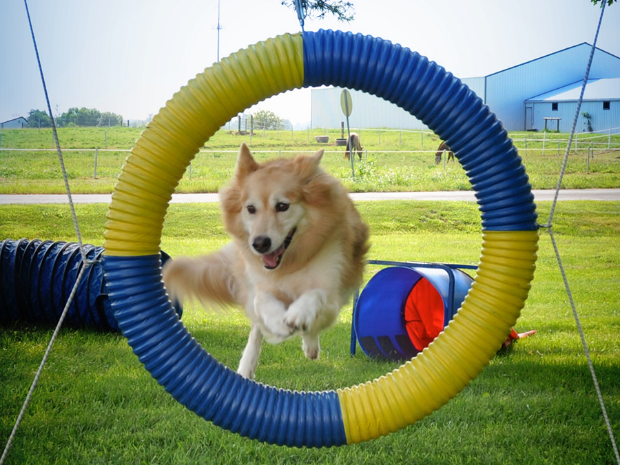 Dog Agility Training at LaBest Pet Resort and Spa