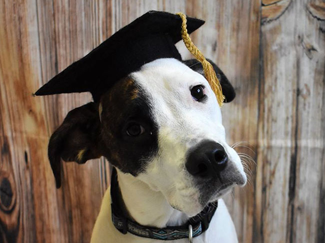 Graduate Dog at LaBest Pet Resort and Spa