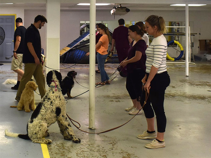 Group Dog Training Class at LaBest Pet Resort and Spa